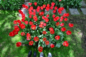 Shoeswithtulips
