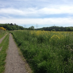 Walking track with some type of flower that is used for some type of oil - I want to say flaxseed? but it's a local variety