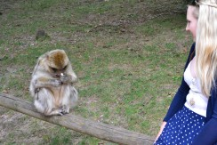 Monkey sniffing the flavoured popcorn I gave him