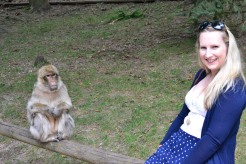 Monkey looking at me like I was poisoning him
