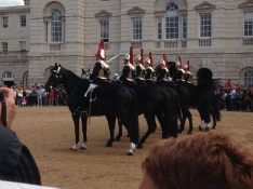 Royal guard horses
