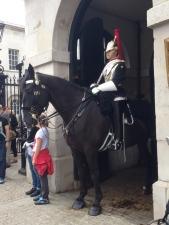 More cavalry horses