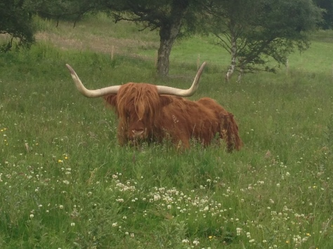 We stopped to take this photo of Highland cattle in the Highlands