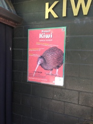The kiwi enclosure